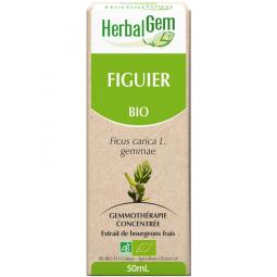 Figuier - Macérat-mère 50ml