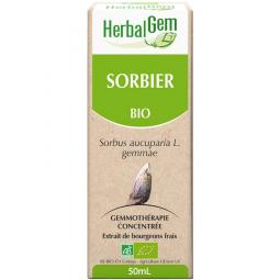 Sorbier - Macérat-mère 50ml