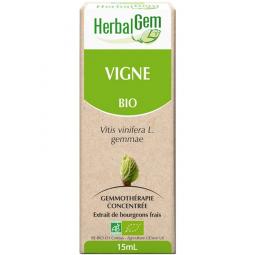 Vigne - Macérat-mère 15ml