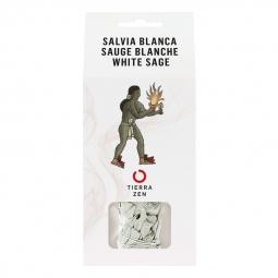 Sauge blanche - 10 cm